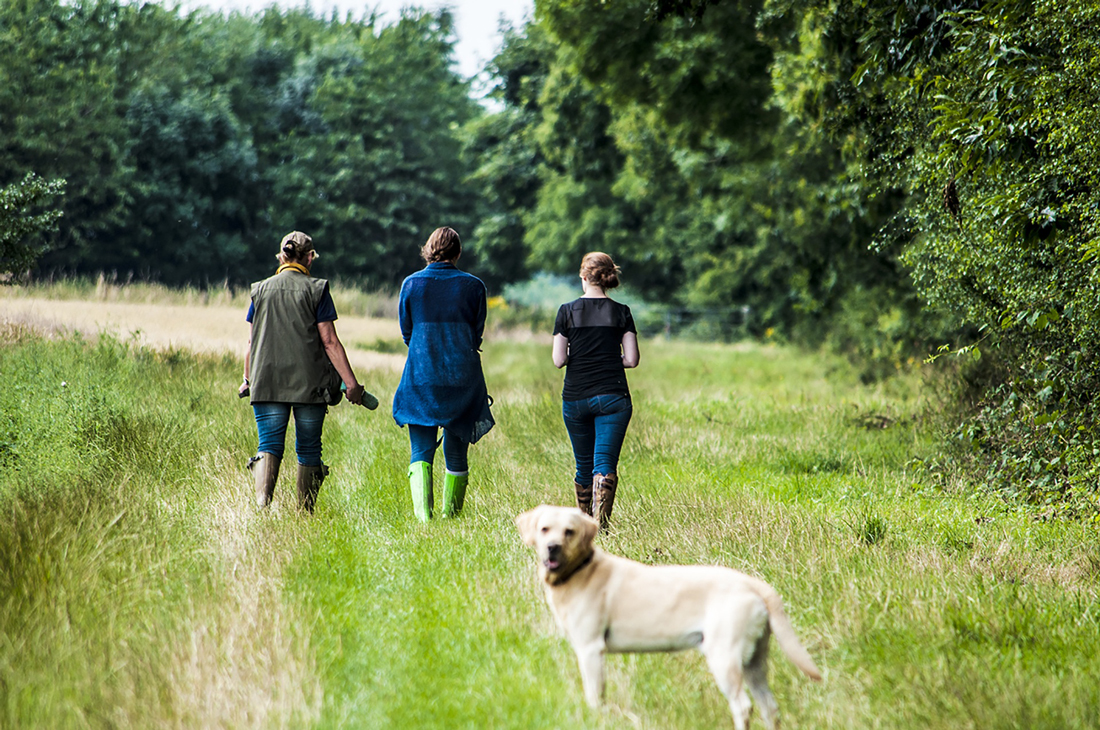 Three people walking a dog through a long grassed field next to a woodland