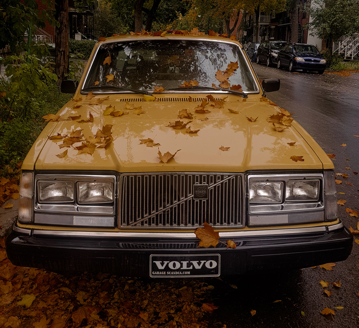 A yellow Volvo 262c parked on a driveway covered in brown leaves