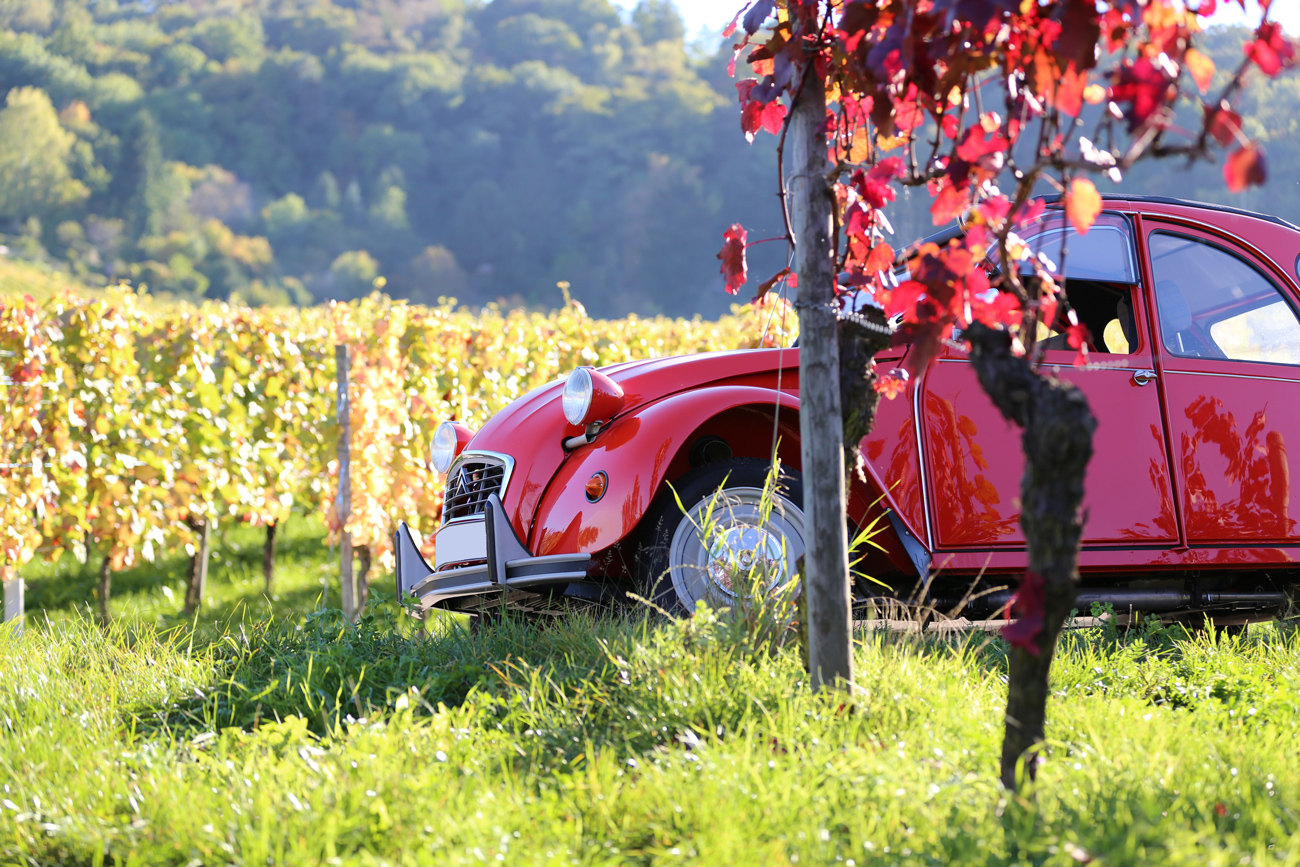 A red Citroen CV parked next to a tree in a French vineyard on a sunny evening