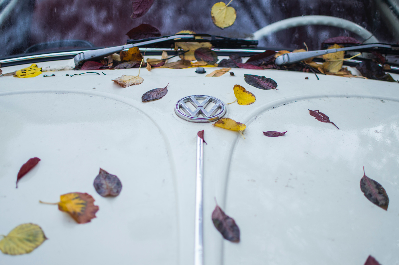 A white VW Beetle bonnet with autumn leaves scattered over it